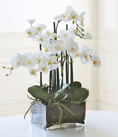 Winward Faux Flowers Phalaenopsis In Square Glass Vase