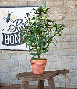 Image of Park Hill Hand Crafted Potted Olive Topiary